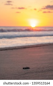 Baby Sea Turtle at Sunset