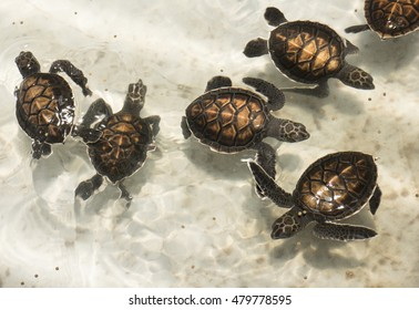 Baby sea turtles in conservation center