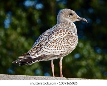 Baby Seagull Images, Stock Photos & Vectors | Shutterstock