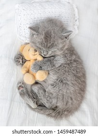 Baby sleeping kitten embracing toy bear on the bed. Top view