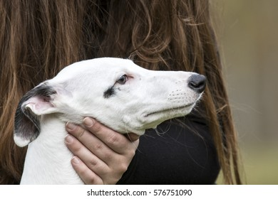 Baby spanish greyhound  with its owner.