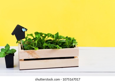 Baby sprouts, shoot, seedling, sapling in a wooden box with topper on bright yellow background. The concept of gardening, growing organic products, eco, home garden on the windowsill
