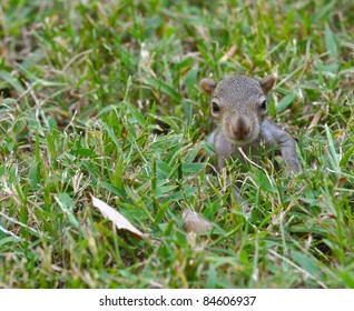 Baby Squirrel in Grass