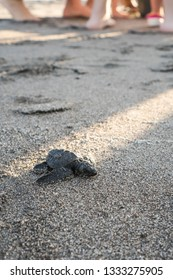 a baby turtle walking towards the sea