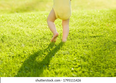 Baby walking barefoot on fresh, green grass in sunny summer evening. Back view. Closeup.