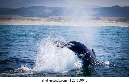 baby whale jumping in the water