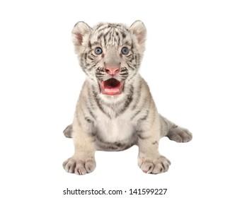 tiger cub images stock photos vectors shutterstock