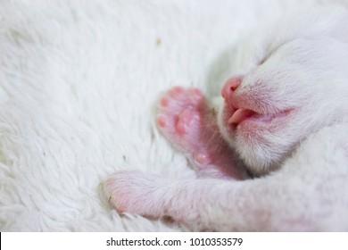 Baby White Cat Kitten newBorn Age 2 day