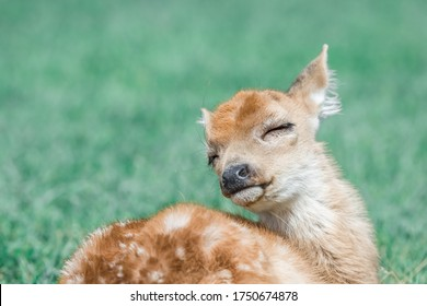 Baby White Tailed deer seems to enjoy its life a lot.
