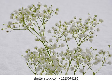 Baby's breath flowers over snow textures