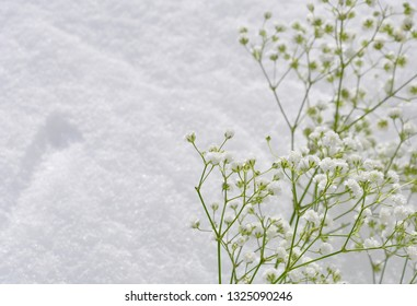 Baby's breath flowers and snow backgrounds