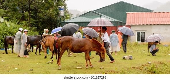 BAC HA, VIETNAM - SEP 21, 2014: Horse selling section at the Bac Ha Market, a large Sunday market with people wearing beautiful colored minorities  costumes