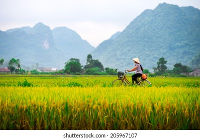 BAC SON, VIETNAM - JULY 13: Local woman on her bicycle along a rice field on July 13, 2014 in Bac Son, Vietnam.  People in Bac Son still use a bicycle as their communal transportation.