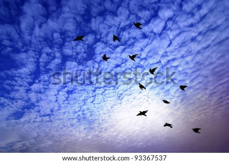 Back of bird flying over dramatic sky.