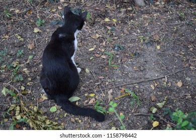 back of black and white cat that was sitting on the messy ground with soil, fallen leaves and little plants.