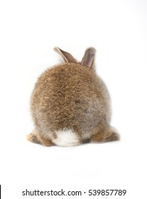 Back of brown short hair adorable baby rabbit on white background