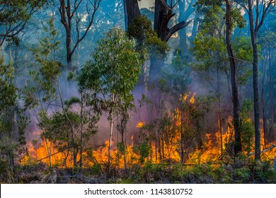 Back burning. the rural fire brigade conducts controlled burning in cooler months to avoid big forest fires in the hot months of the year.