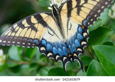 The back of a butterfly displaying mimicry