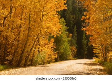 Back country road with colorful autumn aspen trees.