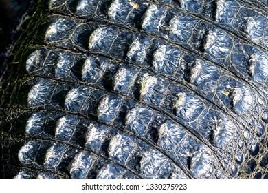 Back of a crocodile skin.