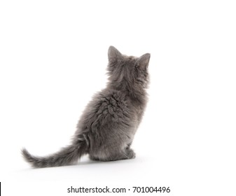 The back of a cute kitten isolated on white background