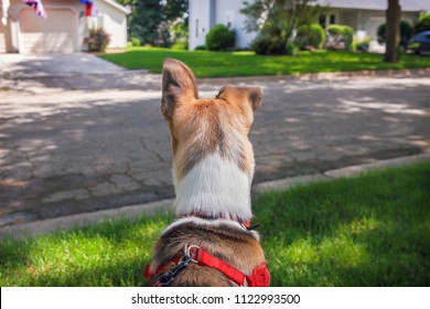 Back of dog's head while on a walk, focus on ears