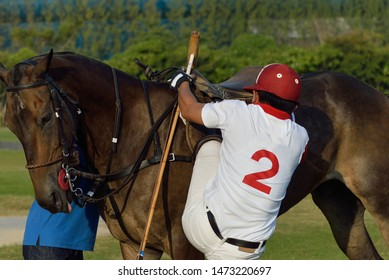 Back image of the polo pony player on begin the polo match.