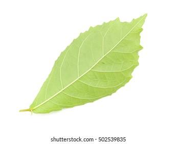 back Koi leaves isolated on white background