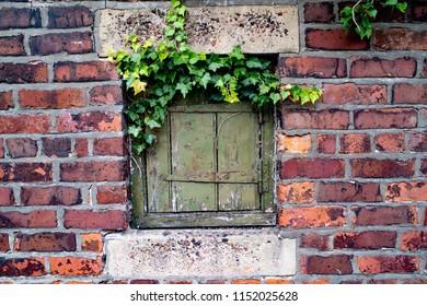 Back Lane Trapdoors