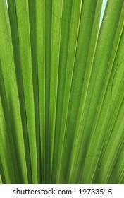 Back lid palm tree leaf