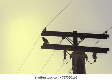 A back lit crow standing on a high voltage wooden pylon - with filter effect.