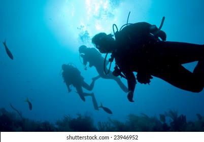 Back lit divers