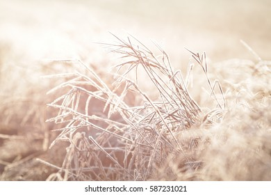 Back lit frozen grass.