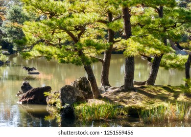 Back lit pine trees in the morning on a small rocky island at the lake surounding the Golden Pavilion, a beautiful zen garden in Kyoto, Japan.