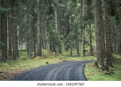 Back road into dark forest