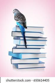 Back to school concept. Cute parrot sitting on top of book stack against color background