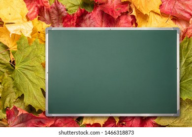 Back to school education concept with copy space on chalkboard located on autumn maple leaves