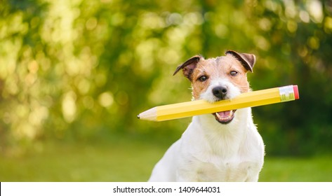 Back to school idea concept with funny dog holding big pencil
