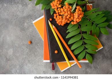 Back to school: rowan branch, notebooks, pencils. School autumn theme.