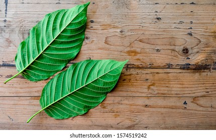Back side of kratom leaf (Mitragyna speciosa) Mitragynine on wooden ,Drugs and Narcotics,Thai herbal which encourage health