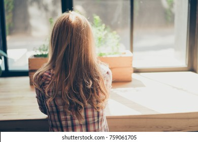 Back side view of woman in checkered shirt relaxing in her work place and enjoying the view from office window