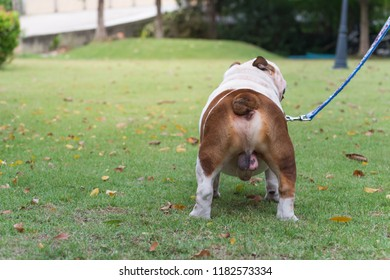 Dog Penis Images Stock Photos Amp Vectors Shutterstock
