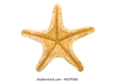 The back of a starfish isolated over white
