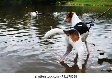 Back top view of a dog at a duck pond