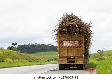 Back of the trailer for transporting sugar cane. In the background cane plantation landscape and some native trees of the forest area south of Pernambuco.