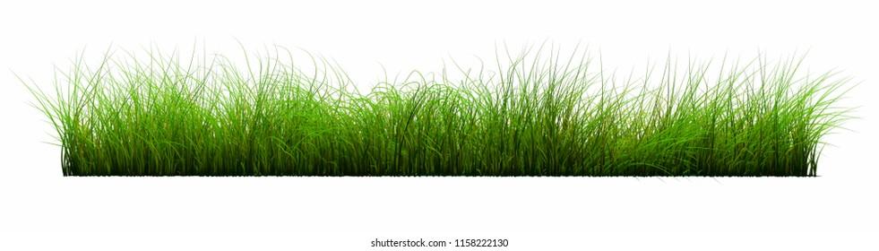 back transparent green grass floor