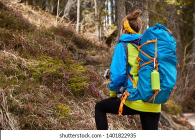 Back view of active female tourist overcomes steemp climbs trails in forest, carries heavy rucksack, goes up hill, dressed in casual jacket with hood, has active rest. Sporty woman recreats at wood