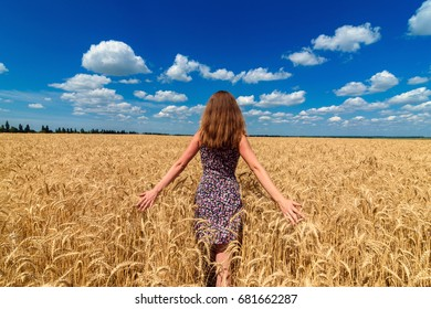 Back view of beautiful young woman walking in golden wheat field with cloudy blue sky background, free space. Liberty, peace of mind concept. Girl in spikes of ripe wheat field under blue sky