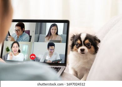 Back view of business woman and team on laptop screen talking and discussion in video conference and dog interruption.Working from home, Working remotely, Pets interruption and Self-isolation.