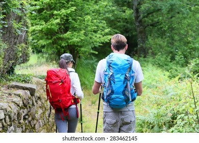 Back view of couple of hikers walking in forest path